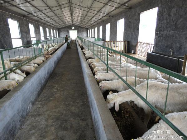 羊养殖场.jpg
