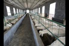 羊粪有机肥生产线